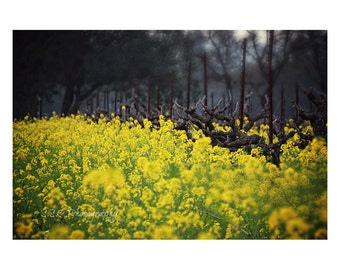 Landscape Photography. Nature. Vineyard. Mustard plant. Bright. Sonoma. Napa. Yellow and Green. Spring Photography. Home Decor