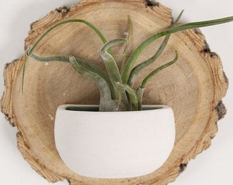Small Porcelain Wall Pocket with Air Plant