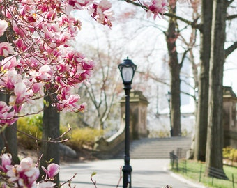 New York Art, NYC Photography, Spring Prints, Magnolia Blossoms Art, New York City Prints, Spring in Central Park