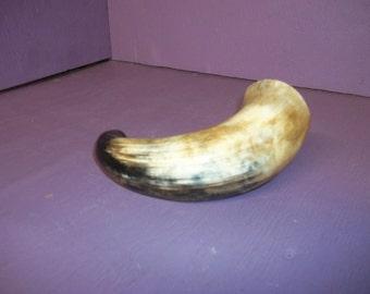 1 Real animal Cow bull stear horn taxidermy head skeleton bone horn part piece