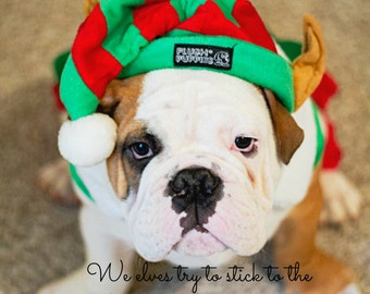 5 x 7 English Bulldog  Puppy Christmas Card