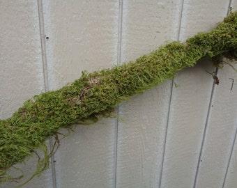 Large Moss Log 2-3 Feet