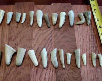 25 antler tips (small)