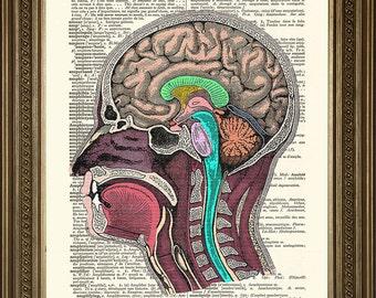 "HEAD ANATOMY ILLUSTRATION: Vintage Dictionary Art Print Biology Design Art Print (size 8 x 10"")"