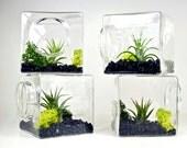 SALE!! Set of 4 Stackable Living Eco Cubes // Modern Air Plant Glass Cubes, Set of Four Air Plant Terrariums, Geometric Terrarium Kit