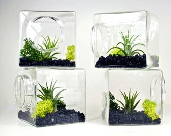 SALE!! Set of 4 Stackable Living Eco Cubes // Modern Air Plant Glass Cubes, Set of Four Air Plant Terrariums, Geometric Terrarium Kit