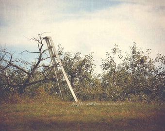 Picking Apples Fine Art Photography Apple Tree Ladder Orchard Fall Autumn Green Brown Earthy Warm Tones Nature Home Decor Wall Art