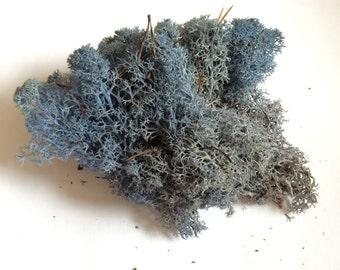 Reindeer Moss Lavender Blue 3 OZ Bag Medium Bag