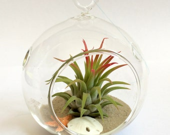 Air Plant Wedding Favor Beach Wedding Glass Orb with Sand Twine Mini Sand Dollar and Starfish