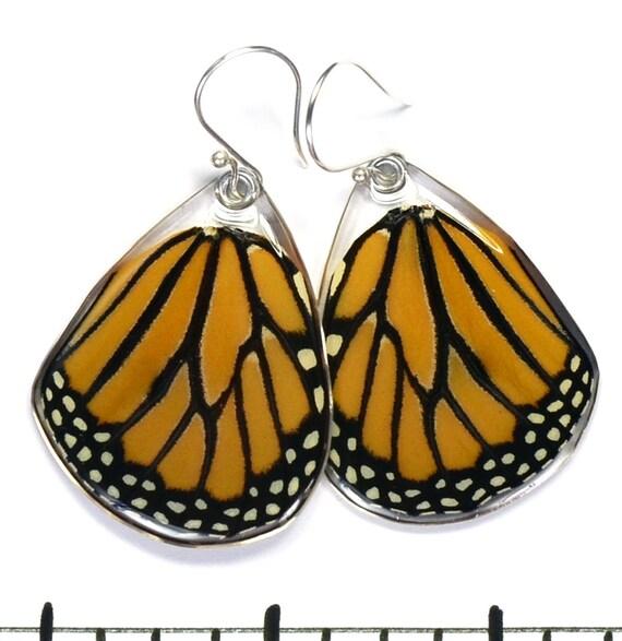 Real Monarch Butterfly (Danaus plexippus) (bottom/hind wings) earrings