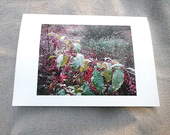 Pokeberry Photo Blank Greeting Card Botanical History