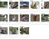 2015 Squirrels Photo Wall Calendar