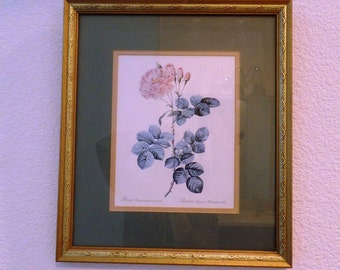 Vintage Botanical Print with Rose. Mat and frame included