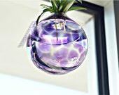 Purple Terrarium, Blown Glass Terrarium, Blown Glass Planter, Spider Plants, Glass Art