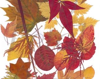 Digital Download Fall Pressed Leaves Collage Print