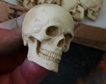 One small Catacomb Skull, small realistic human skull, anatomical study, Cabinet of Curiosities, Cast Shadows Studio, by Richard Chalifour