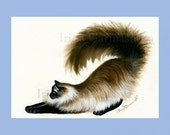 Ragdoll Cat Print Stretch by Irina Garmashova