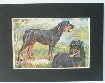 ROTTWEILLER Dogs Vintage Mounted 1958 Weber dog plate print Unique Birthday Anniversary Thank you Congratulations  gift