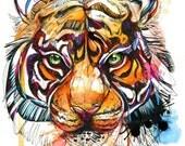 """Brilliant Bengal Tiger Print- 8.5""""x 11"""" Print"""