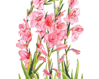 Limited Edition Signed Print, Peach Pink Gladioli Flowers in Botanical Style Watercolour