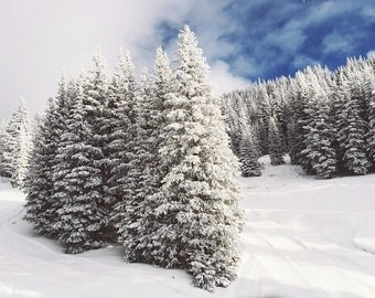 Winter Trees photograph, Snowy Trees, Evergreens with snow art, Rocky mountains, Ski area photograph