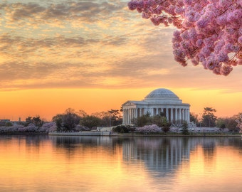 Cherry Blossom Photography - Washington DC Print - Jefferson Memorial Photo - DC Photography - Sunrise - Cherry Blossom Festival