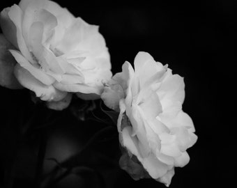 Twin Roses, Black and White, 8x10 Fine Art Print, 7x5 Blank Greeting Card, Original Design