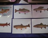 Six Vintage prints/plates 1900 Fish A W Mumford