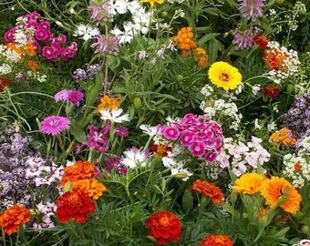BULK 2,000 Fragrant Wildflower Mix, Cover a Large Area, Attracts Butterflies, Annual and Perennial Mix
