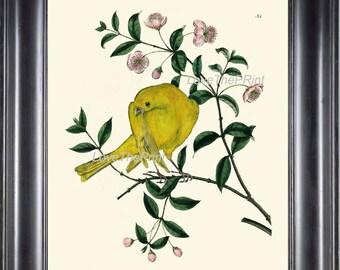 BIRD EGGS  Art Print B3 Beautiful Antique Yellow Canary Bird Pink Flowers Tree Branch Wall Hanging Home Living Room Interior Design