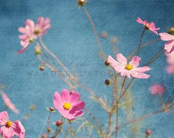 Seoul Cosmos 3 - Photographic print -  wanderlust, travel, bohemian, pink, blue, asia, boho,  korea 12 x 12, 16 x 16, 20 x 20