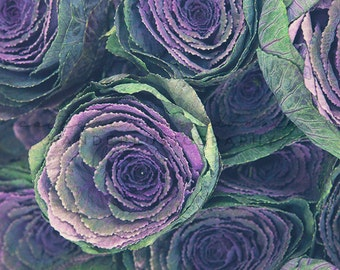 Flower Market Series: Ornamental Cabbage - Photographic Print floral, Romantic, korea, photography, decor, art, Asia, purple, bohemian, boho