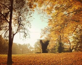 Fine Art Photography- Fall foliage - Home Decor- Autum- Art Print- Ohio-Cincinnati- 8x10--Wall art-red-yellow-trees-farmlife