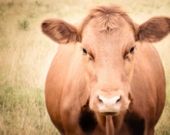 Cow Photography - Animal Photography - Wall Art - Nursery Art