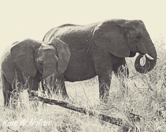 Mother and Baby Elephant photo Black and White elephant photos African elephant Baby animals Elephant calf Safari animals African animals