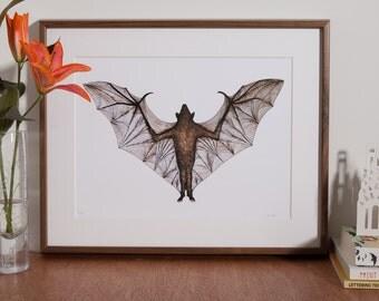 Vampire Bat Print -Limited Edition -A4- Bat Print - Bat Art - Pen and Ink Art- Hand Drawn Artwork - Bats - Bat illustration