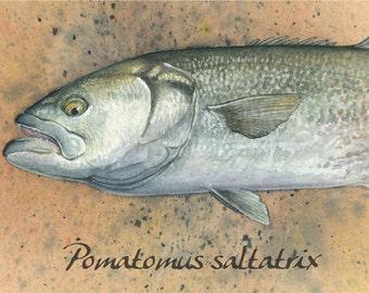 Bluefish Painting Art Print
