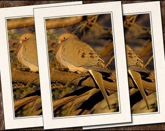 3 Mourning Dove Photo Note Cards - Mourning Dove Note Card - 5x7 Mourning Dove Cards - Photo Greeting Cards Handmade (IN112)
