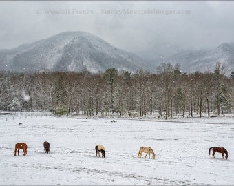 Five Horses in the Snow E92