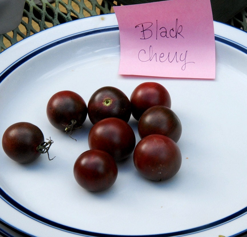 organic black cherry tomato seed perfectly round cherry with. Black Bedroom Furniture Sets. Home Design Ideas