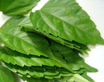 Organic Hibiscus leaves - Dried - 1 Oz