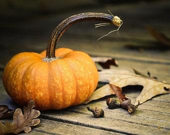 nature photography pumpkin autumn  8x12 home decor office decor