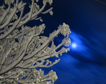 Moonlight Snow (17) - Digital Photo for Download - A Snow scene on a Beautiful Moonlight night - Jerusalem mountains. Nature Scene photo