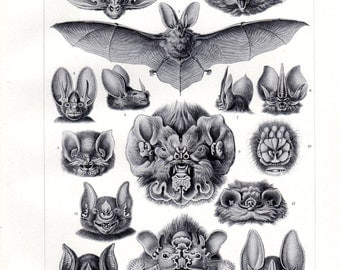 1899 Antique Print Bat Original Ernst Haeckel Print Chiroptera Bats Kunstformen Natur 1st ed Pl 67