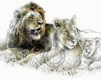 African lions watercolour - wildlife art - nature print of original artwork