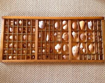 "Seashell Study ""Mann Island"" in Vintage Printer's Tray"