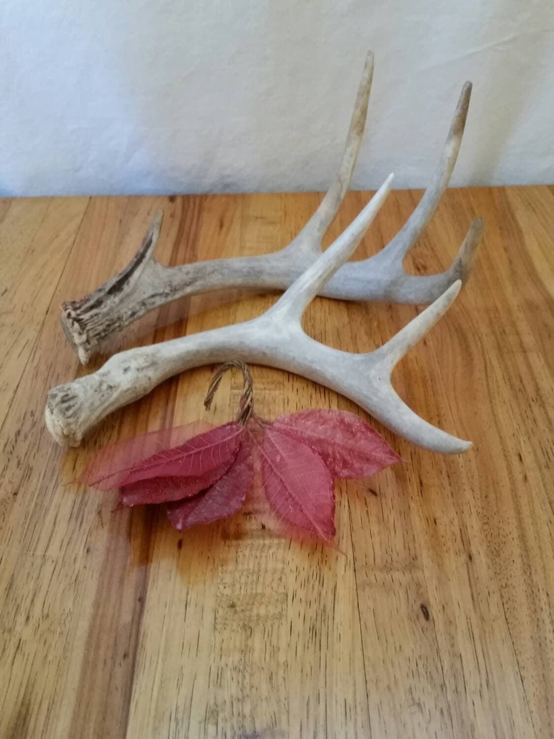 Antler vintage home decor nature inspired rustic by for Antler decorations for home
