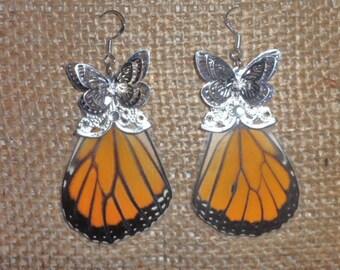 Real Monarch Butterfly Wing Earrings