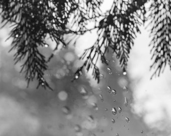 """black and white photography, raindrops, nature, droplets, monochromatic wall art - 16x20, 11x14 or 8x10 photograph, """"Embracing the Rain"""""""
