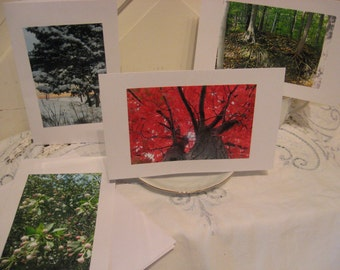 Trees Through the Seasons Set of 4 nature photo cards and envelopes, BLANK or SPIRITUAL TEXT option, all occasion handmade note cards